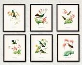 Hummingbird Print Set 1 - Bird Prints - Giclee Canvas Art Prints - Antique Botanicals - Poster - Wall Art