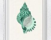 Sea shell print in seafoam  n02 - sea life print- seashells wall art home decor -A 4 print coastal home decoration SPS021