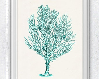 Sea fan coral in turquoise no.12 - sea life print-Marine  sea life illustration A4 print SPC054