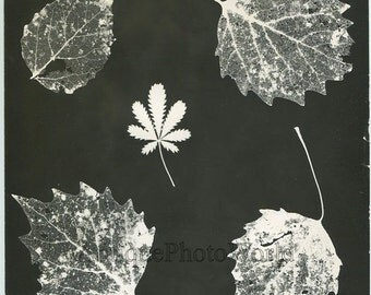 Leaves photogram vintage abstract art photo