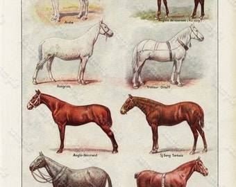 Antique Original old French lithograph Encyclopedia Print of Animals - Various horses