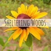 ShelteringWoodsSeeds