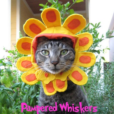 PamperedWhiskers