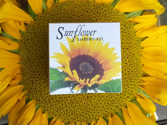 Sunflower Seeds Garden Kit Sunflower Seed Wedding Favor