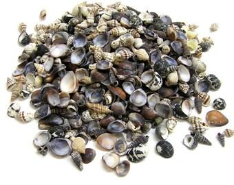 Assorted Natural Sea Shell Grab Bag
