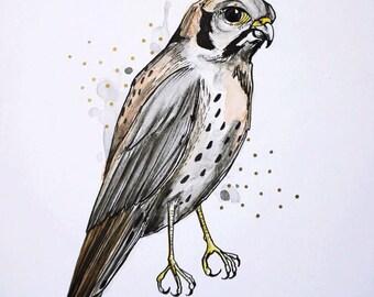 "Little Eagle, original Illustration, Illustration bird, 10 ""x 8"""