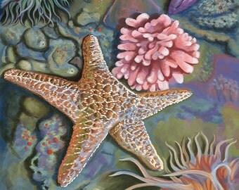 Cape Cod, Massachusetts - Tidepool (Art Prints available in multiple sizes)