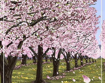 Washington - Cherry Blossoms (Art Prints available in multiple sizes)