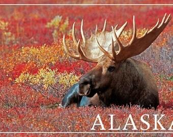 Alaska - Bull Moose (Art Prints available in multiple sizes)