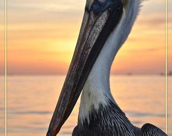 Sanibel, Florida - Pelican (Art Prints available in multiple sizes)