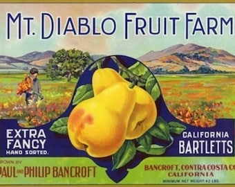 Bancroft, California - Mt. Diablo Fruit Farm Brand Pear Label (Art Prints available in multiple sizes)