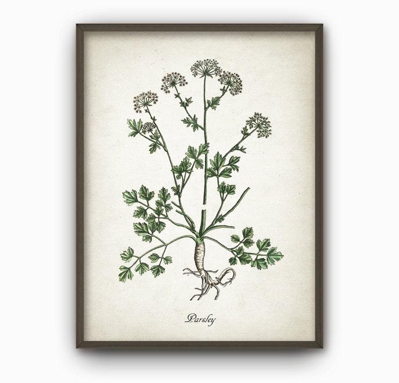 Kitchen Herbs Wall Art Print Set Of 12 Vintage Botanical