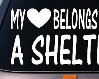 My Heart Belongs To A Sheltie Sticker Decal *D930*