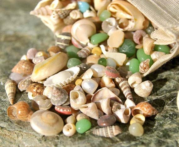 Items similar to 1 tiny sea shell mix for crafts or for Tiny shells for crafts