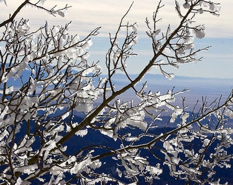 Through The Branches - Original Fine Art Photograph - Snowy Branches