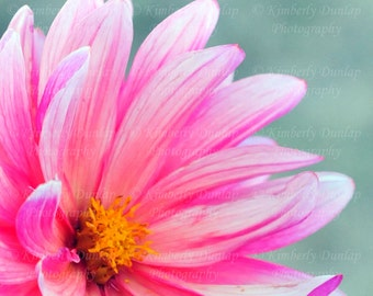 Dahlia Photograph {Hot Pink Flower Photo, Large Blossom Print, Floral Photography, Over-sized Bloom Picture, Nursery Wall Decor Artwork Art}