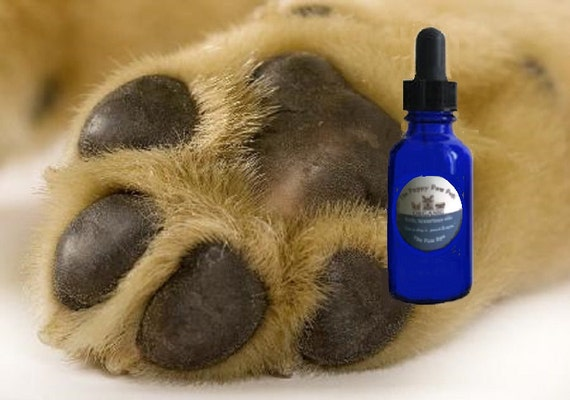 Dog Paw And Nose Treatment Cracked Dry Paw Pads Amp By
