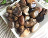 Set of Three Petrified Wood Tumbled Stone-Tumbled Stones- Petrified Wood- Healing Stones