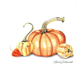 realistic pumpkin drawing. autumn gourds, and pumpkin. print is 8\ realistic pumpkin drawing