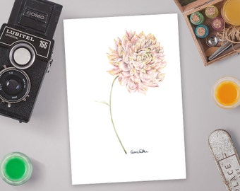 Botanical Art,  Drawing of a Dahlia Flower in Pink | Limited Edition of 20 Giclee Art Prints