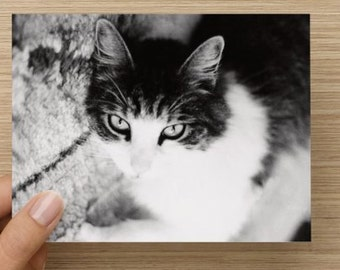 Sultry cat Folding note cards set of 10 with envelopes