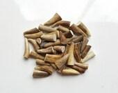 40 Deer Antler Tips, Naturally shed