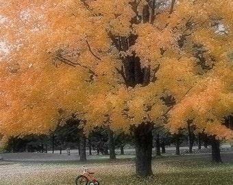 Fall Tree, Fine Art Print
