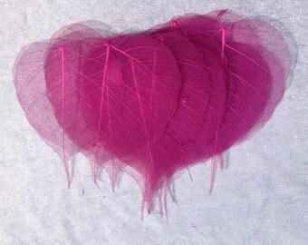 15 Pink Skeleton Leafs Leaves Scrapbooking Crafting Embellishments