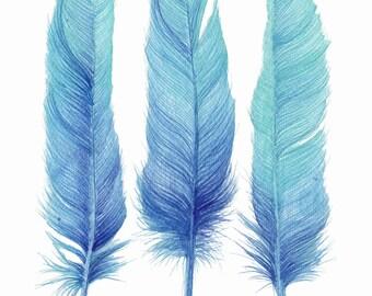 Three Turquoise Feathers Limited Edition Watercolour Art Print Coastal Style Decor Boholux Decor