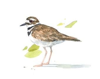 Killdeer Watercolor 8x10 Print, bird painting, nature decor