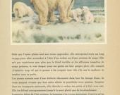 Vintage Polar Bear Print, 1944/15, Wild Animals, Anton Trieb, Nursery Art, Nature Art, Nature Wall Art, Nature Watercolor, White Bear Print