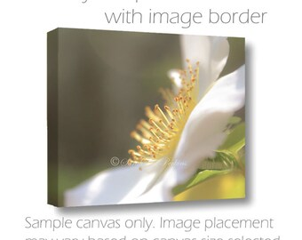 SALE-Flower Photography-Floral Art-Fine Art Canvas-Floral Wall Decor-Delicate Soft Light-White Anemone Petals-8x10/11x14/16x20/20x30/24x36