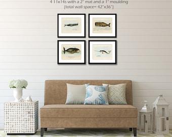 Whale Posters, Whale Wall Art, Whale Art Print Set, Nautical Prints Beach Home Decor, Narwhal, Sperm Whale, Bowhead Whale, Nautical Wall Art