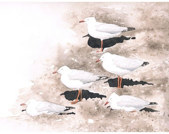 Silver Gulls Original Watercolour Painting