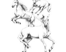 """Illustration """"Lipizzaner2"""", artwork of pencil drawning, horses"""