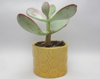 Clay Honeycomb Hexagonal Planter - Small Succulent Vase - Ceramic Mini Plant Holder - READY TO SHIP - Geometric Garden Pot - Gift Packaged