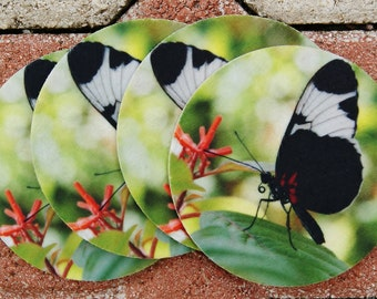 Black and White Butterfly Coasters