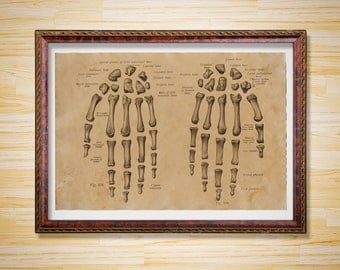 Anatomy print Skeleton poster Hands decor