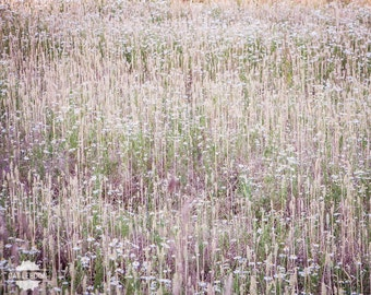 What Do You See? - abstract photo of white and purple flowers, field of flowers and grass, beautiful nature