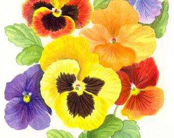 Colorful Pansies - Nature Watercolor Painting Reproduction Fine Art Print or Wrapped Canvas for Home Decor.
