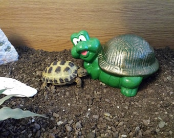 Cute Tortoise/ Turtle Garden Ornament. Hand cast and Painted. Frost & Water Proof