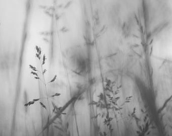 "Summer Wild Grass - 16"" x 12"" Photographic Print"