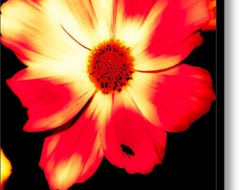 Fine art photography, floral print, daisy art, botanical print, nature photography, flower pictures, flower petals, wall art, canvas prints