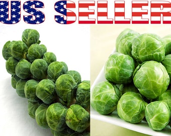 100+ ORGANIC Long Island Improved Brussel Sprouts Seeds Heirloom NON-GMO Tasty!