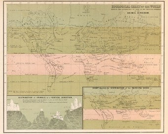 Zoological chart of the World map