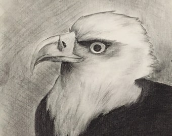 Charcoal eagle drawing/sketch