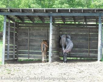 Equine Nap Time  - North Carolina