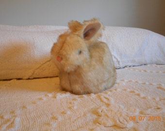 Nestling Bunny