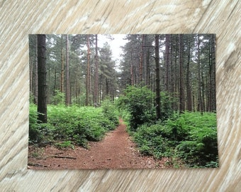 Sherwood Forest Postcard