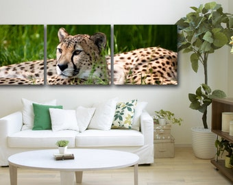 """3 Panel Leopard, Wildlife Photography shot Printed on a Canvas. Stretched print on 1.5"""" deep frames. Great for home, office decor & interior"""